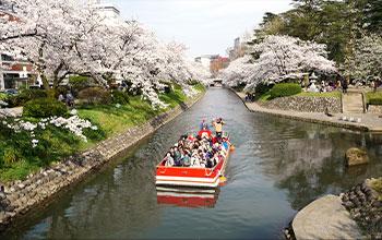 벚꽃이 만개한 마쓰카와 유람선(도야마시)